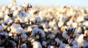 Cotton history 633x348