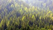 Slovenski.gozd.jpg
