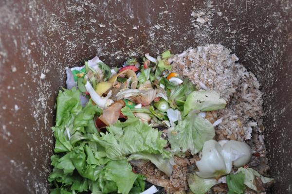 Hrana v zabojnikih za smeti