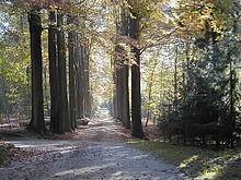 flamski-gozd